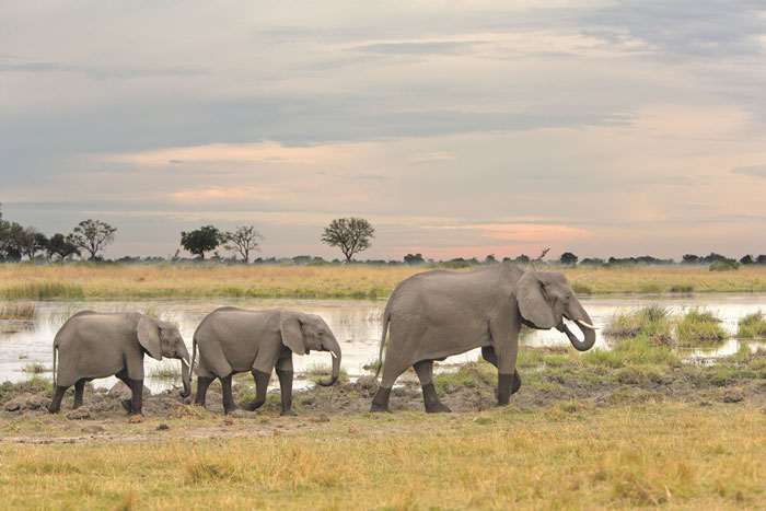 honeymoon-inspiration-botswana