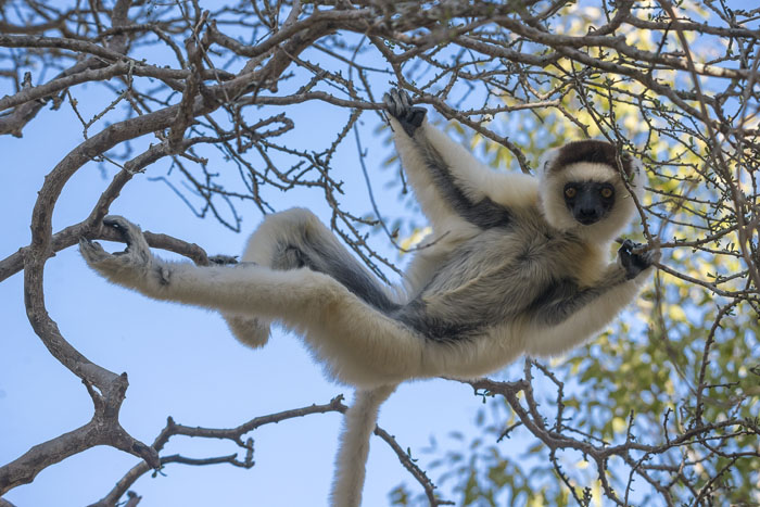 how-to-honeymoon-in-madagascar-7