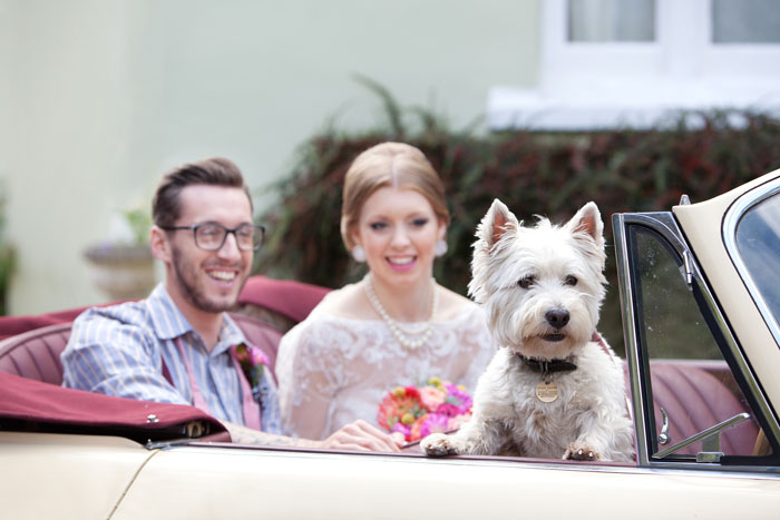 five-pet-friendly-wedding-venues-in-the-south-west-4
