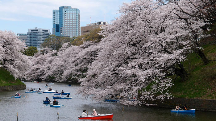 reasons-why-you-should-spend-your-honeymoon-in-japan-9