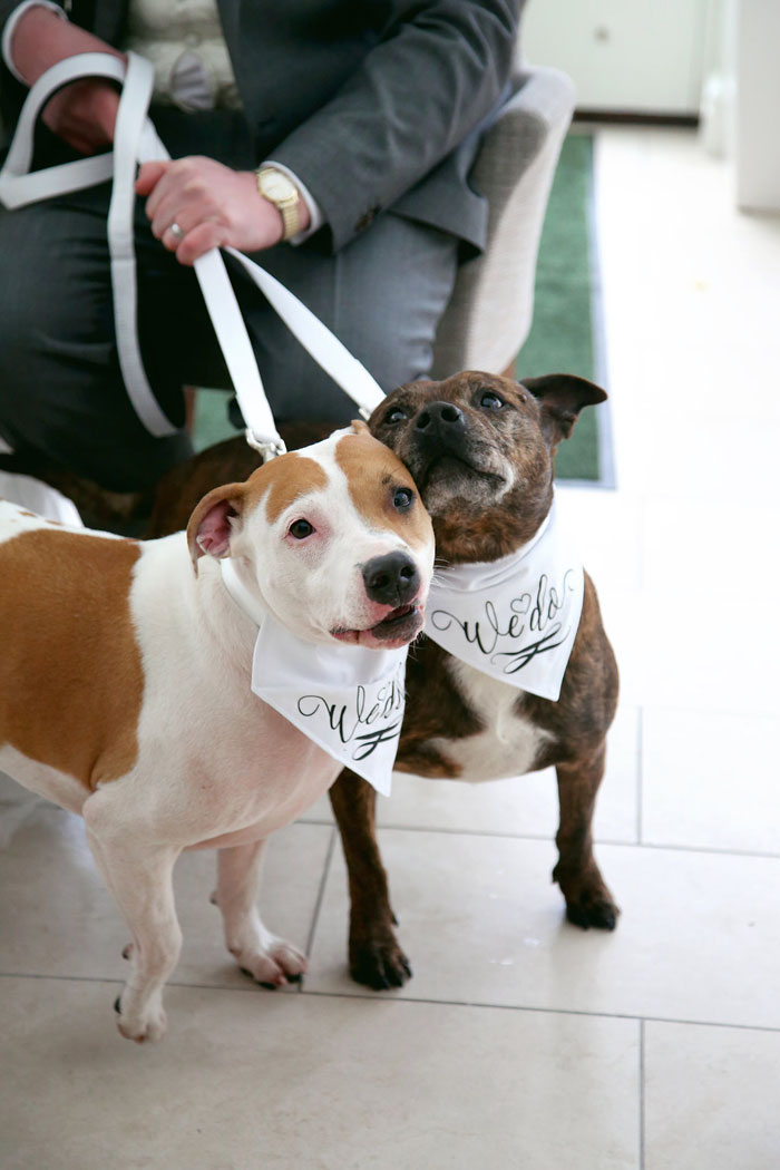 eleven-adorable-pets-at-weddings-13