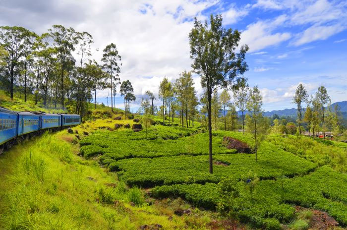 sri-lanka-the-honeymoon-destination-for-you-4